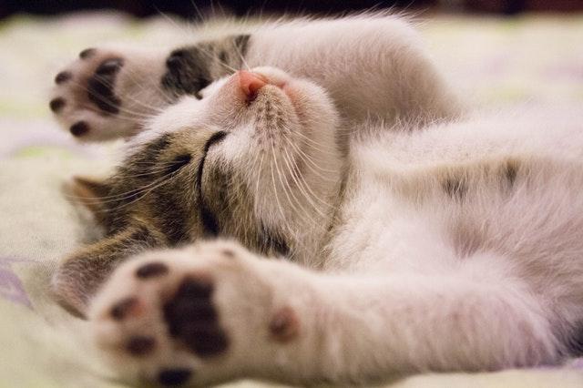 chat-qui-se-repose-sur-le-dos